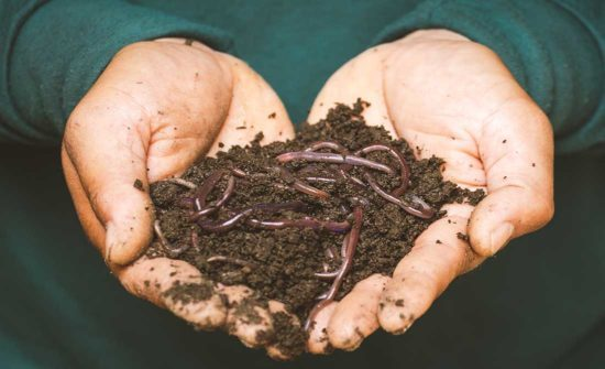 earthworms-on-a-persons-hand-550px